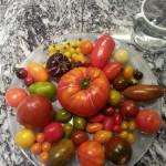 mandala pomodori
