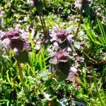 piante commestibili