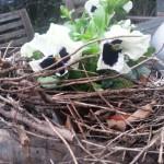 nido in fiore